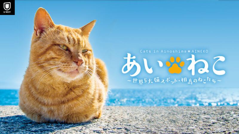 あいねこ ~世界5大猫スポット・相島のねこたち~
